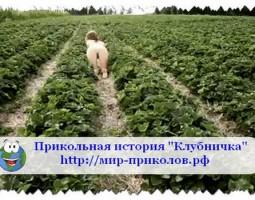 Прикольная история «Клубничка».
