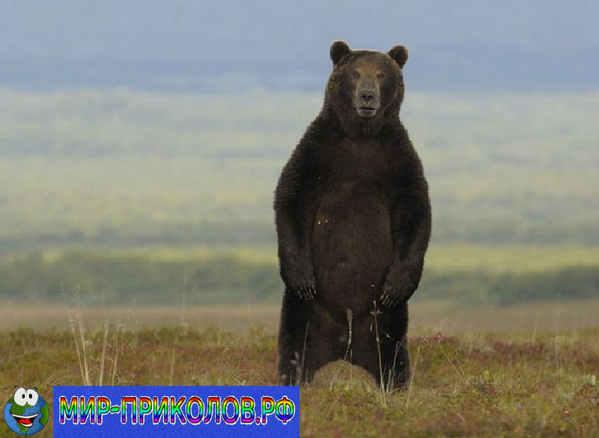прикольные фото животных_1