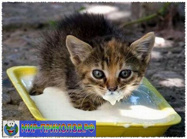 Прикольные фото кошек и котят 10