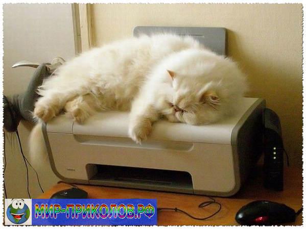 Прикольные фото кошек и котят 11