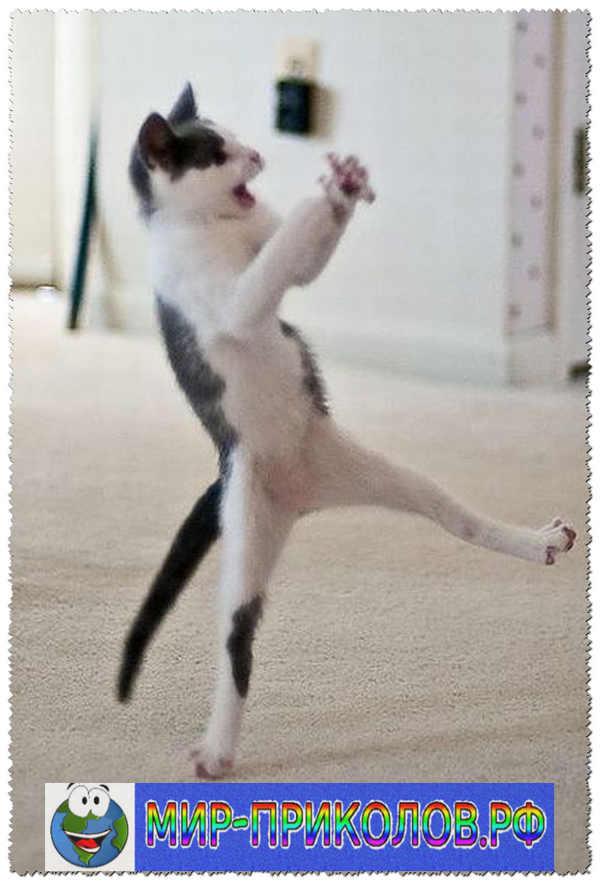 Прикольные фото кошек и котят 13