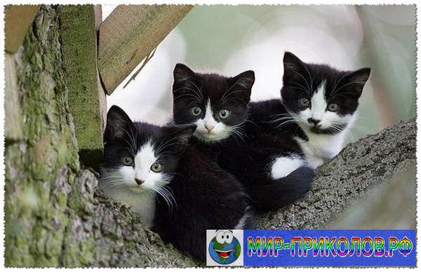 Прикольные фото кошек и котят 15