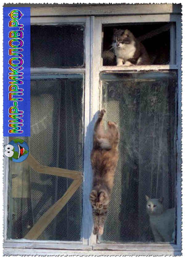 Прикольные фото кошек и котят 17