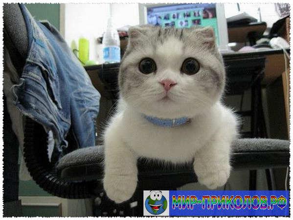 Прикольные фото кошек и котят 18