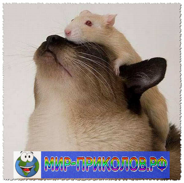 Прикольные фото кошек и котят 19