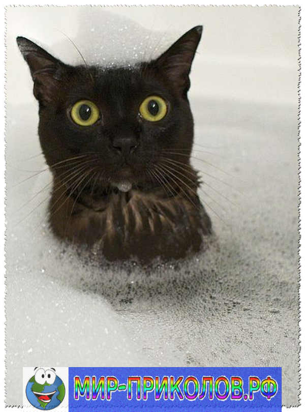 Прикольные фото кошек и котят 2