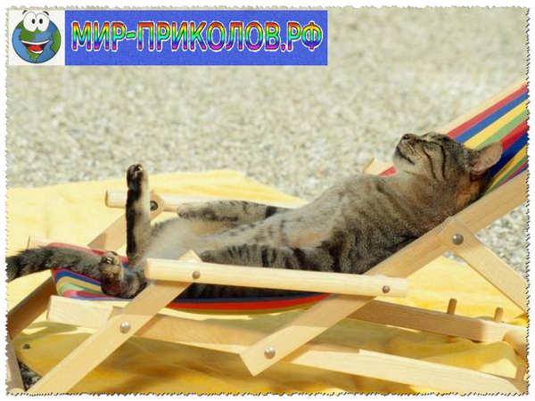 Прикольные фото кошек и котят 20