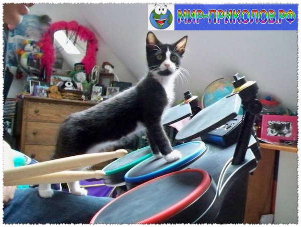 Прикольные фото кошек и котят 22