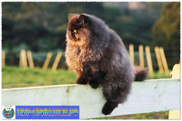 Прикольные фото кошек и котят 3