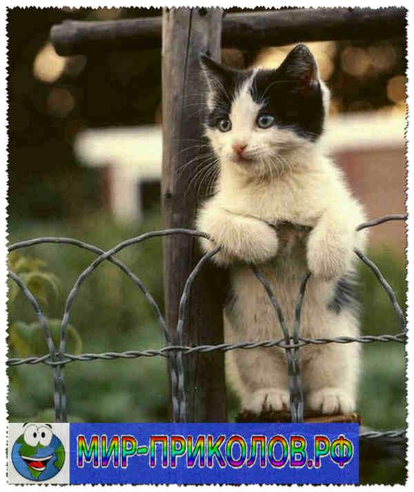 Прикольные фото кошек и котят 4