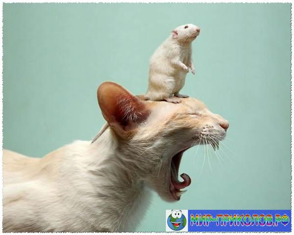 Прикольные фото кошек и котят 5