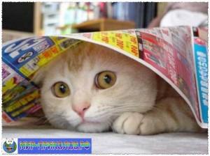 Прикольные фото кошек и котят 7