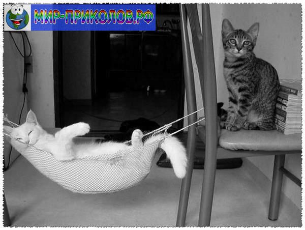 Прикольные фото кошек и котят 9