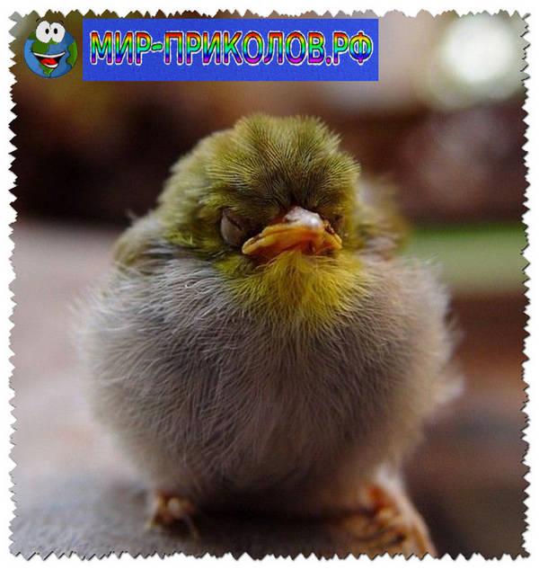 Прикольные-фото-птиц-prikolnye-foto-ptic-1