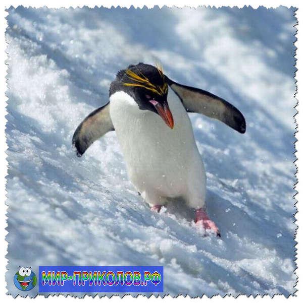 Прикольные-фото-птиц-prikolnye-foto-ptic-10