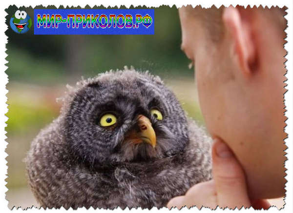 Прикольные-фото-птиц-prikolnye-foto-ptic-11