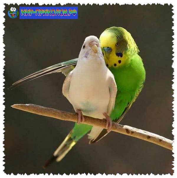 Прикольные-фото-птиц-prikolnye-foto-ptic-12