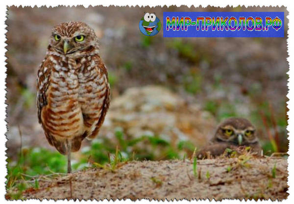 Прикольные-фото-птиц-prikolnye-foto-ptic-13