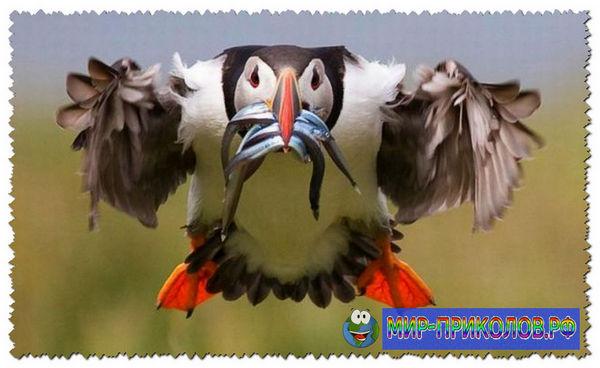 Прикольные-фото-птиц-prikolnye-foto-ptic-14