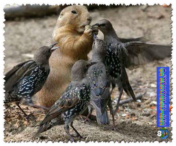 Прикольные-фото-птиц-prikolnye-foto-ptic-16