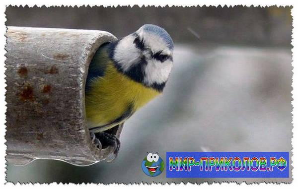 Прикольные-фото-птиц-prikolnye-foto-ptic-17