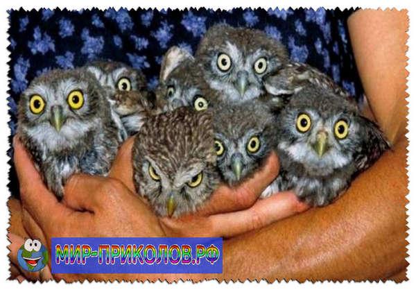 Прикольные-фото-птиц-prikolnye-foto-ptic-18