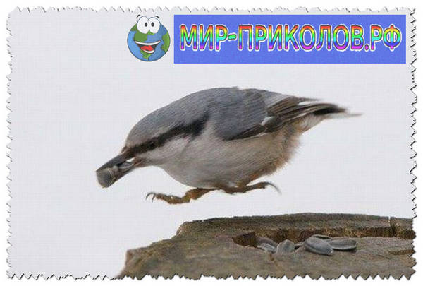 Прикольные-фото-птиц-prikolnye-foto-ptic-2