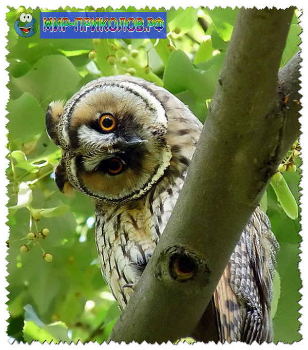 Прикольные-фото-птиц-prikolnye-foto-ptic-3
