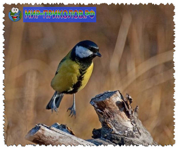 Прикольные-фото-птиц-prikolnye-foto-ptic-4