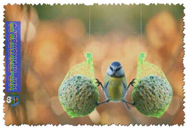 Прикольные-фото-птиц-prikolnye-foto-ptic-5