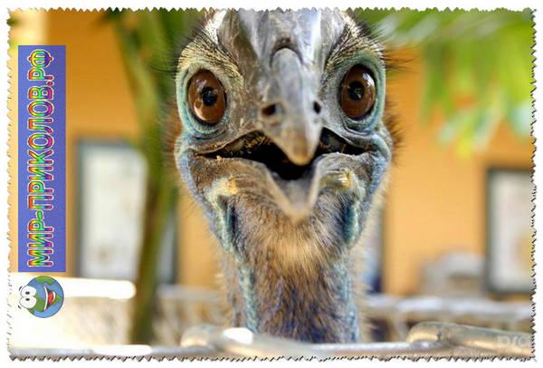 Прикольные-фото-птиц-prikolnye-foto-ptic-6