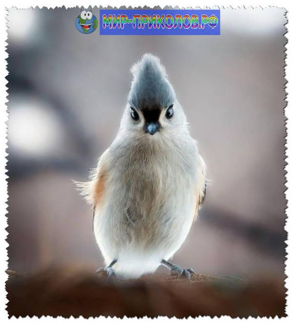 Прикольные-фото-птиц-prikolnye-foto-ptic-7