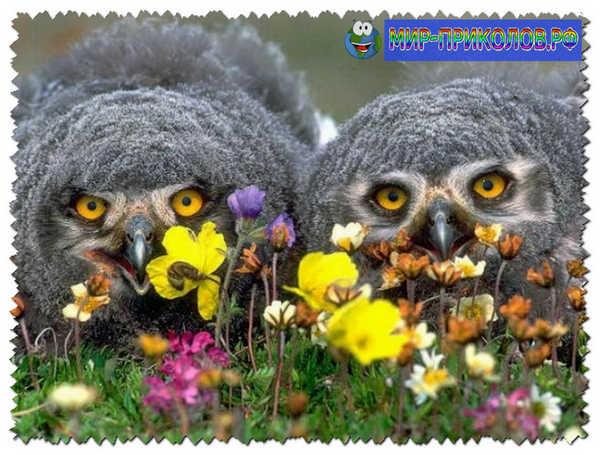 Прикольные-фото-птиц-prikolnye-foto-ptic-9