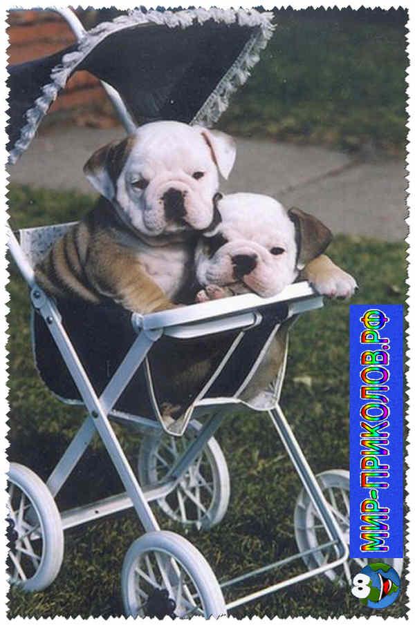 Прикольные фото собак 10