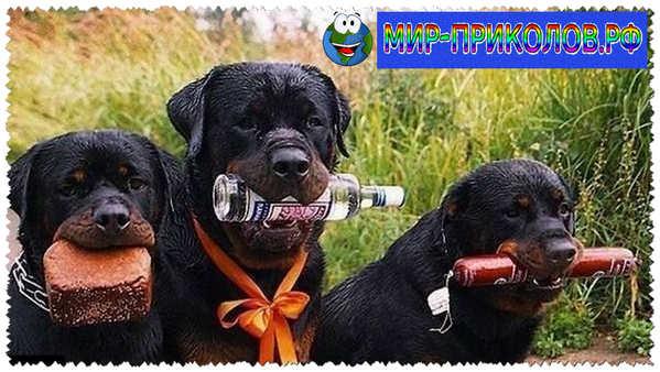 Прикольные фото собак 11