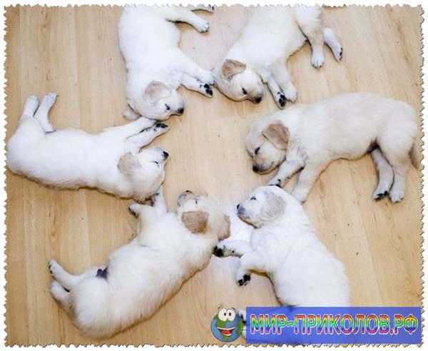 Прикольные фото собак 12