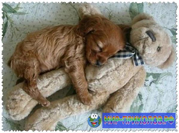 Прикольные фото собак 14