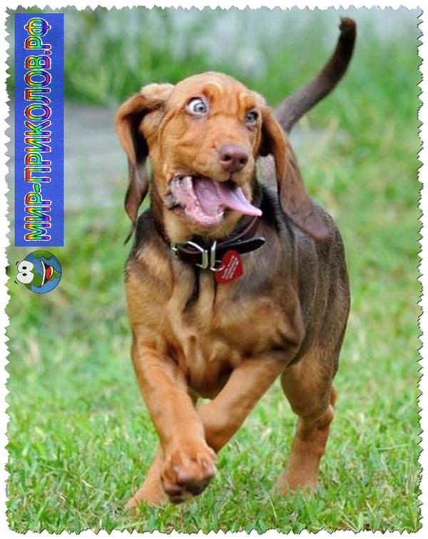 Прикольные фото собак 16