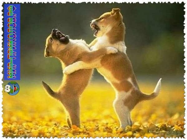 Прикольные фото собак 18