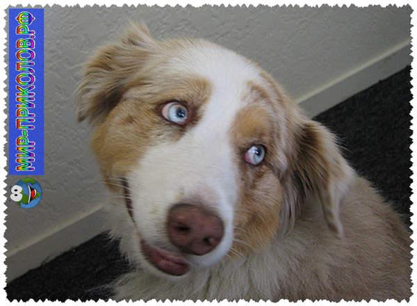 Прикольные фото собак 19