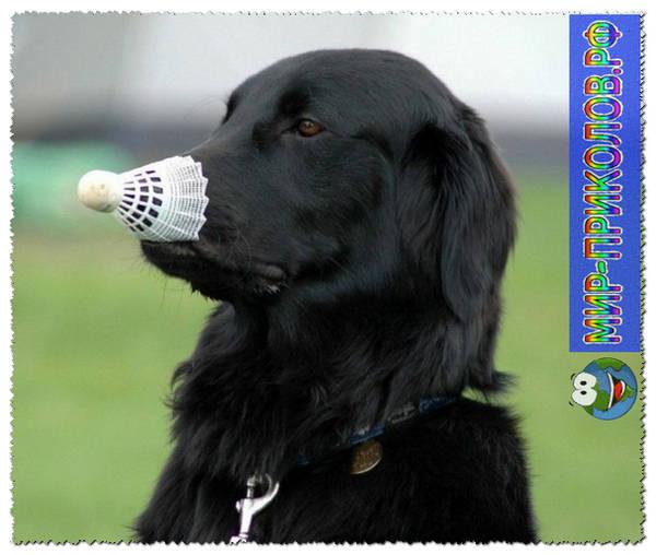 Прикольные фото собак 3
