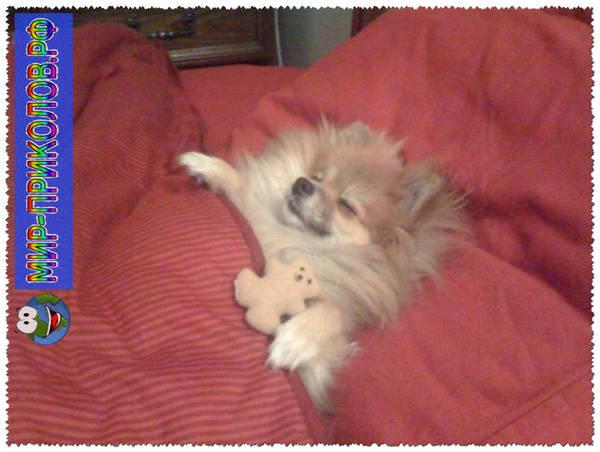 Прикольные фото собак 4