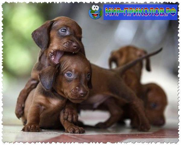 Прикольные фото собак 5
