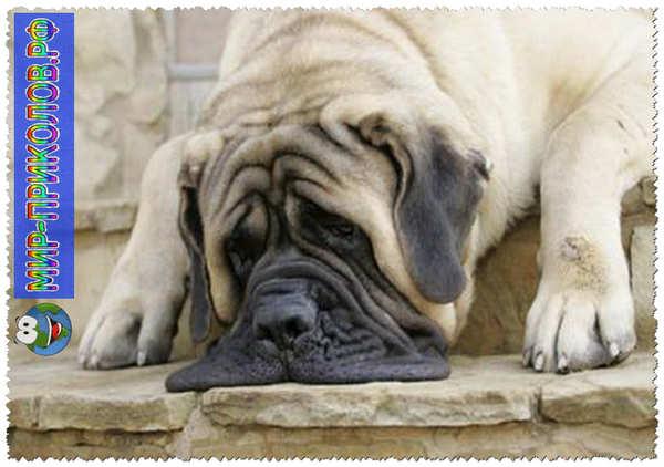 Прикольные фото собак 6