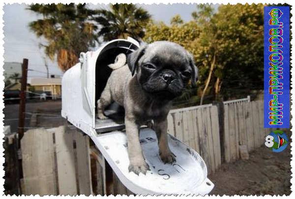Прикольные фото собак 7