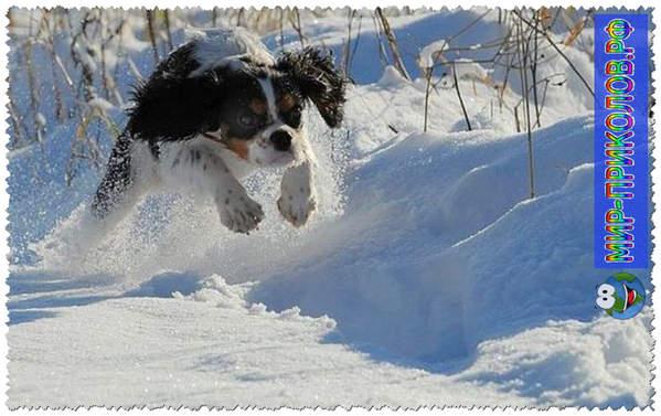 Прикольные фото собак 9