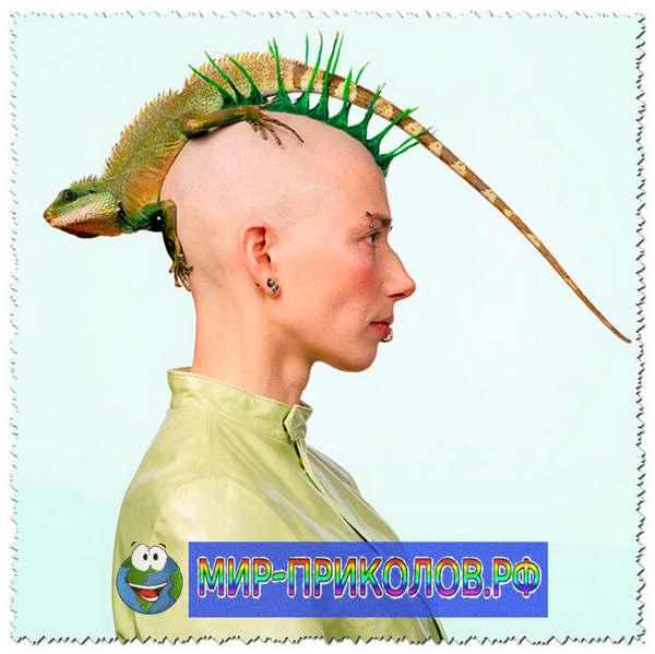 Прикольные-причёски-prikolnye-prichyoski-6