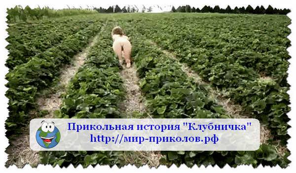 Прикольная-история-Клубничка-prikolnaya-istoriya-klubnichka
